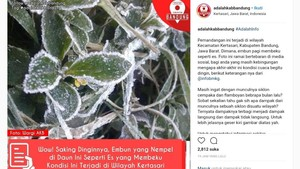 Viral Foto Daun Membeku di Kertasari, Ini Jawaban BMKG Bandung