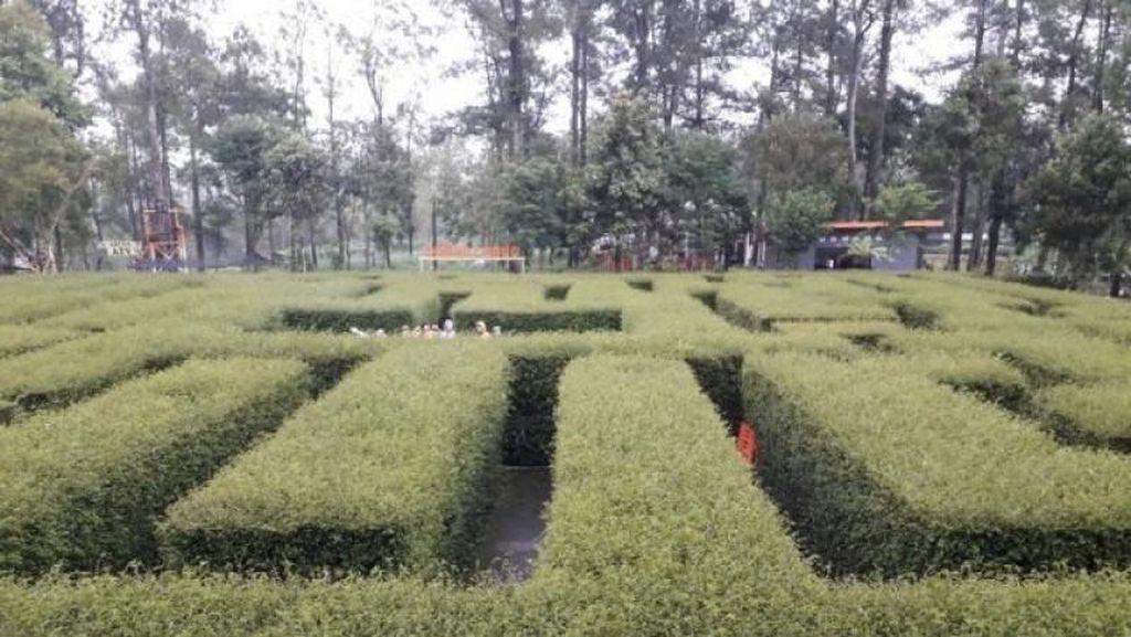 Mengunjungi Taman Labirin di Malang yang Asyik