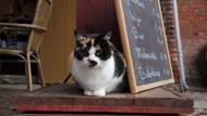 Kafe di Dubai Ini Jadi Tempat Nongkrong dan Adopsi Kucing