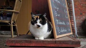 Kafe Ini Unggah Reaksi Para Kucing yang Heboh Saat Terjadi Gempa