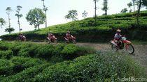 Trabas Kebun Teh dengan Honda CRF150L