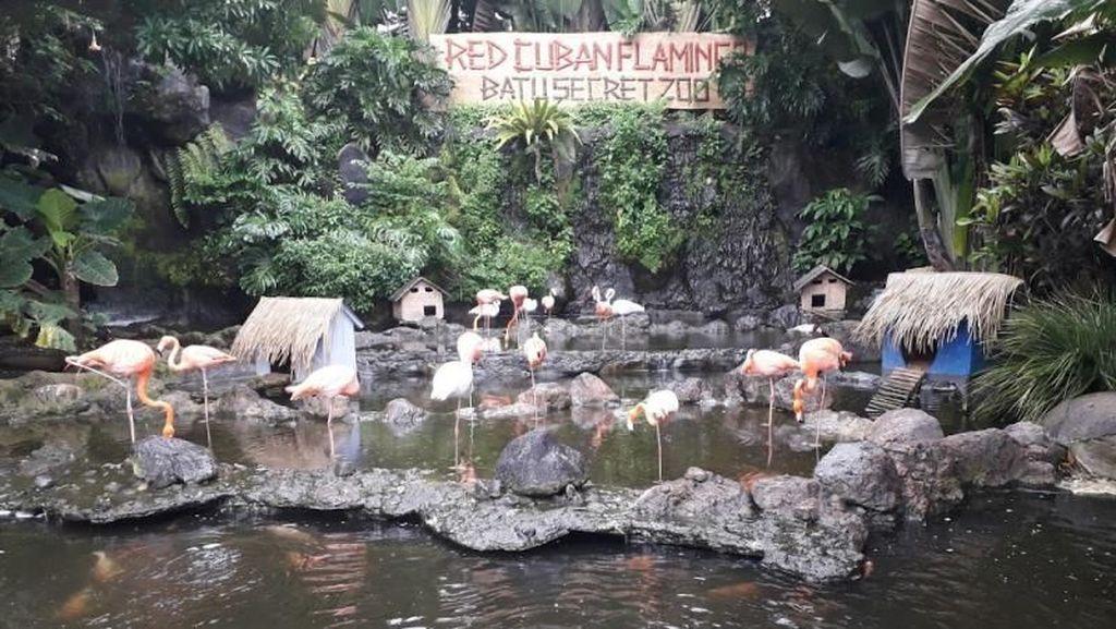 Kebun Binatang yang Tak Biasa di Batu