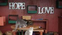 Kucing-kucing ini dirawat dengan sangat baik (Leezel Tanglao/CNN)