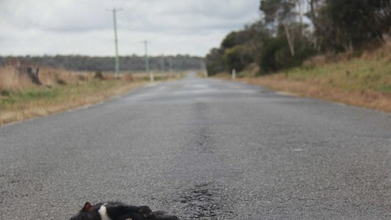 Kurangi Kematian Satwa Asli, Tasmania Uji Cobakan Aplikasi Ponsel