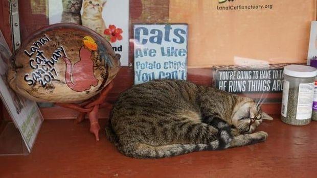 Kucing-kucing ini bebas berkeliaran (Leezel Tanglao/CNN)