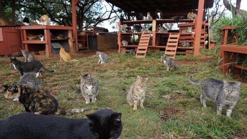 Pulau Lanai di Hawaii merupakan yang terkecil dan unik. Pulau ini punya penampungan kucing yang bernama Lanai Cat Sanctuary. (Leezel Tanglao/CNN)