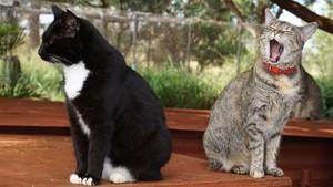 Gemas Deh! Ada Pulau Penampungan Kucing di Hawaii
