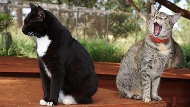 Lanai Cat Sanctuary (Leezel Tanglao/CNN)