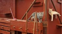 Meong! Pulau Penampungan Kucing yang Bikin Gemas