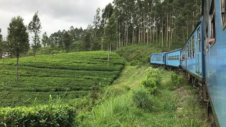 Jalur kereta cantik di Sri Lanka (dok. Mihiri Wikramanayake/Istimewa)