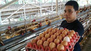 Harga Telur Ayam Naik, Ini Penyebabnya Versi Peternak