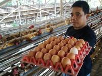 Duh, Harga Telur Ayam di Mana-mana Naik!