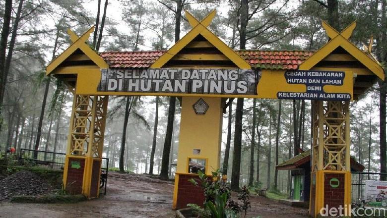 Foto: Eventnya akan diadakan di Hutan Pinus Malino (Taufiq/detikTravel)