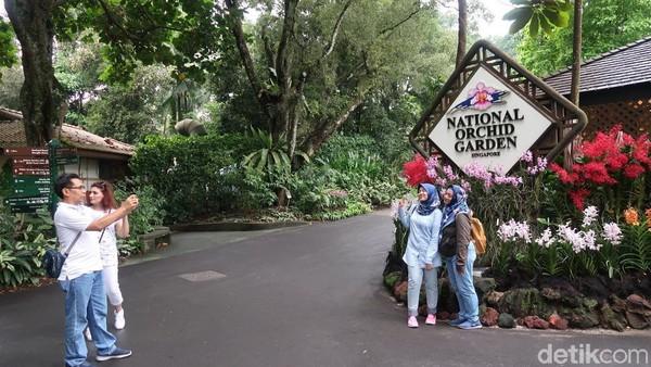 Di dalam Singapore Botanic Garden ada banyak sudut cantik dan pepohan yang rindang. Namun satu tempat yang wajib kamu kunjungi di taman ini adalah Orchid Garden-nya (Bonauli/detikTravel)