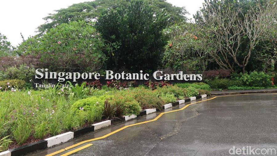 Terkenal dengan gedung-gedung modern, ternyata Singapura juga punya taman kota yang menyegarkan. Mirip Taman raya Bogor, tempat ini bernama Singapore Botanic Garden. Berada di jalan 1 Cluny Road, taman yang luas ini punya lebih dari 1 pintu masuk (Bonauli/detikTravel)