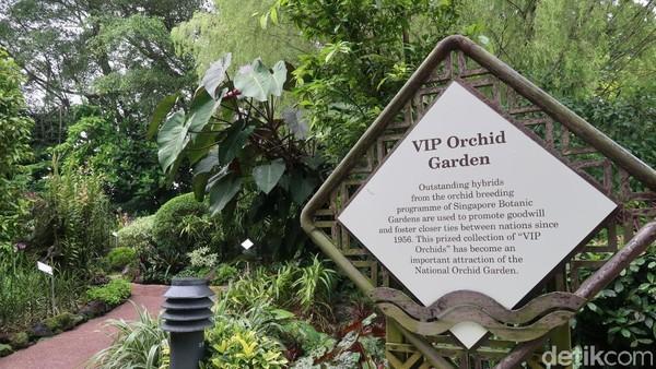 Masuk agak ke dalam, ada area khusus untuk anggrek VIP. Anggrek-anggrek ini dihibrida dengan jenis lain sehingga jadi anggrek jenis baru. Taman ini pun dianugerahi sebagai taman anggrek terbesar dunia. Wah! (Bonauli/detikTravel)