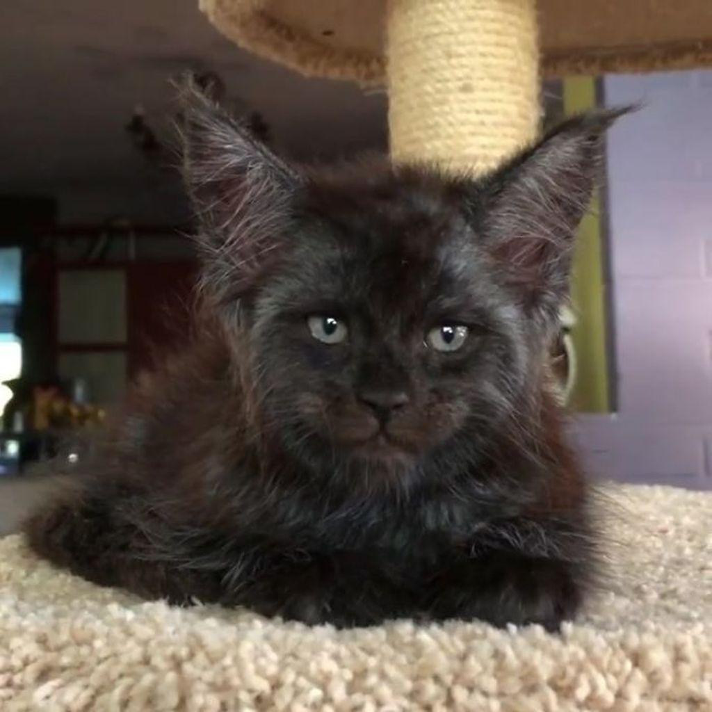 Sosok kucing tersebut baru-baru ini menjadi tenar lantaran wajahnya yang sedikit berbeda dengan kucing kebanyakan. (Foto: Instagram)