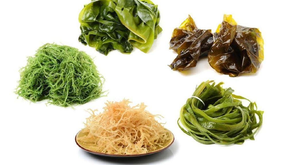 Ini 6 Jenis Rumput Laut, Superfood Jepang yang Bikin Awet Muda dan Ramping