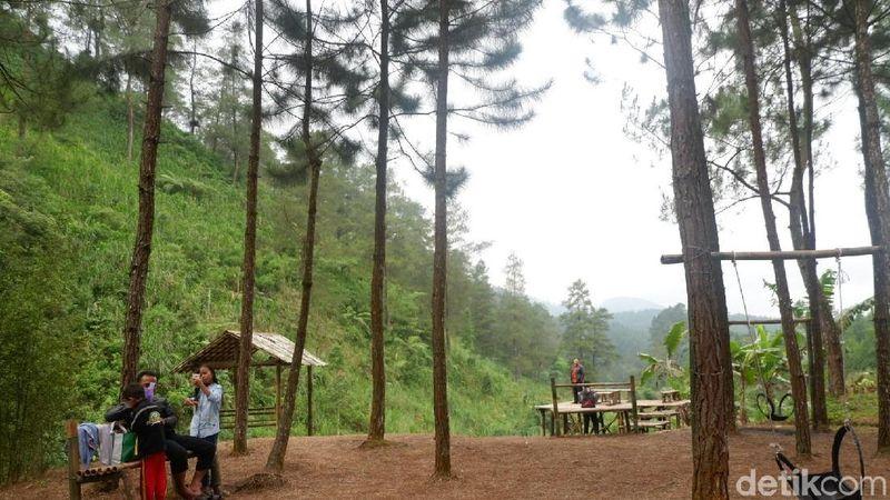 Foto: Obyek wisata ini ada di Desa Kalibening, Banjarnegara. Pohon pinus yang menjulang tinggi di antara pemandian air hangat ini membuat suasana sejuk dan rindang (Uje/detikTravel)
