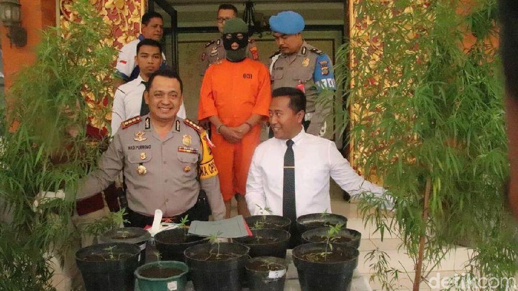 Tanam 22 Pohon Ganja, Desainer Ditangkap di Bali