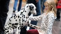 Anjing dalmatian (AFP)