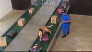 Saat 4 Anjing K9 BNN Beraksi di Depan Wiranto