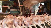 Harga Daging Ayam dan Telur Naik, Omzet Pedagang Anjlok 50%