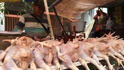Pedagang Daging Ayam di Sleman Mogok Jualan