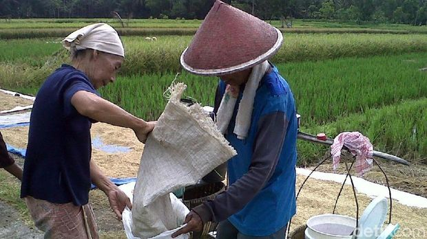 Tradisi Ngurup petani di Purworejo