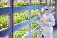 Tanpa Sinar Matahari, Smart Farm Ini Hasilkan 10 Ton Sayuran Per Hari