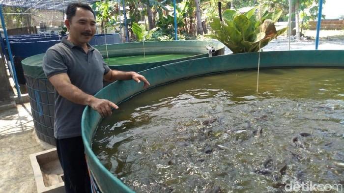 Udin melakukan budidaya ikan lele dengan sistem bioflok yang diperkenalkan Menteri Susi Pudjiastuti. (Foto: Charolin Pebrianti)