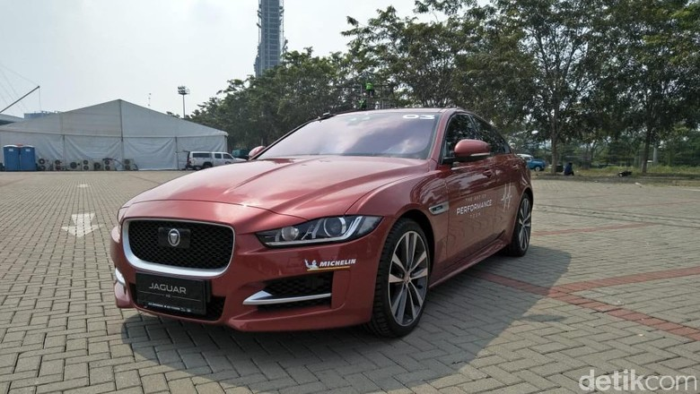 Jaguar Foto: Ruly Kurniawan