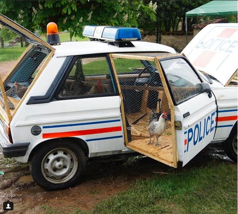 Saat mobil polisi berubah menjadi kandang ayam Foto: Pool (@bufalinobenedetto)