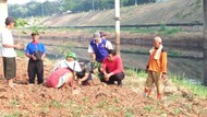 Blusukan ke BKT, Mentan Tanam Cabai di Lahan Tidur