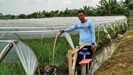 Cara Petani Bawang Merah Hindari Penyakit Inul di Musim Hujan