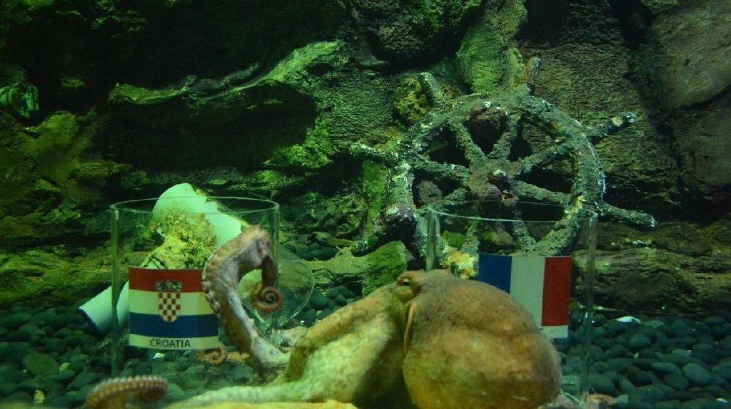 Ikan dan Gurita Sea World Prediksi Kroasia Juara Piala Dunia 2018