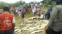Ini Pasal yang Dikenakan Pelaku Pembantaian Buaya di Sorong