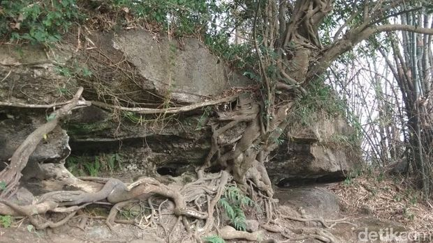 ini penampakan gua sarang ular sanca di mojokerto