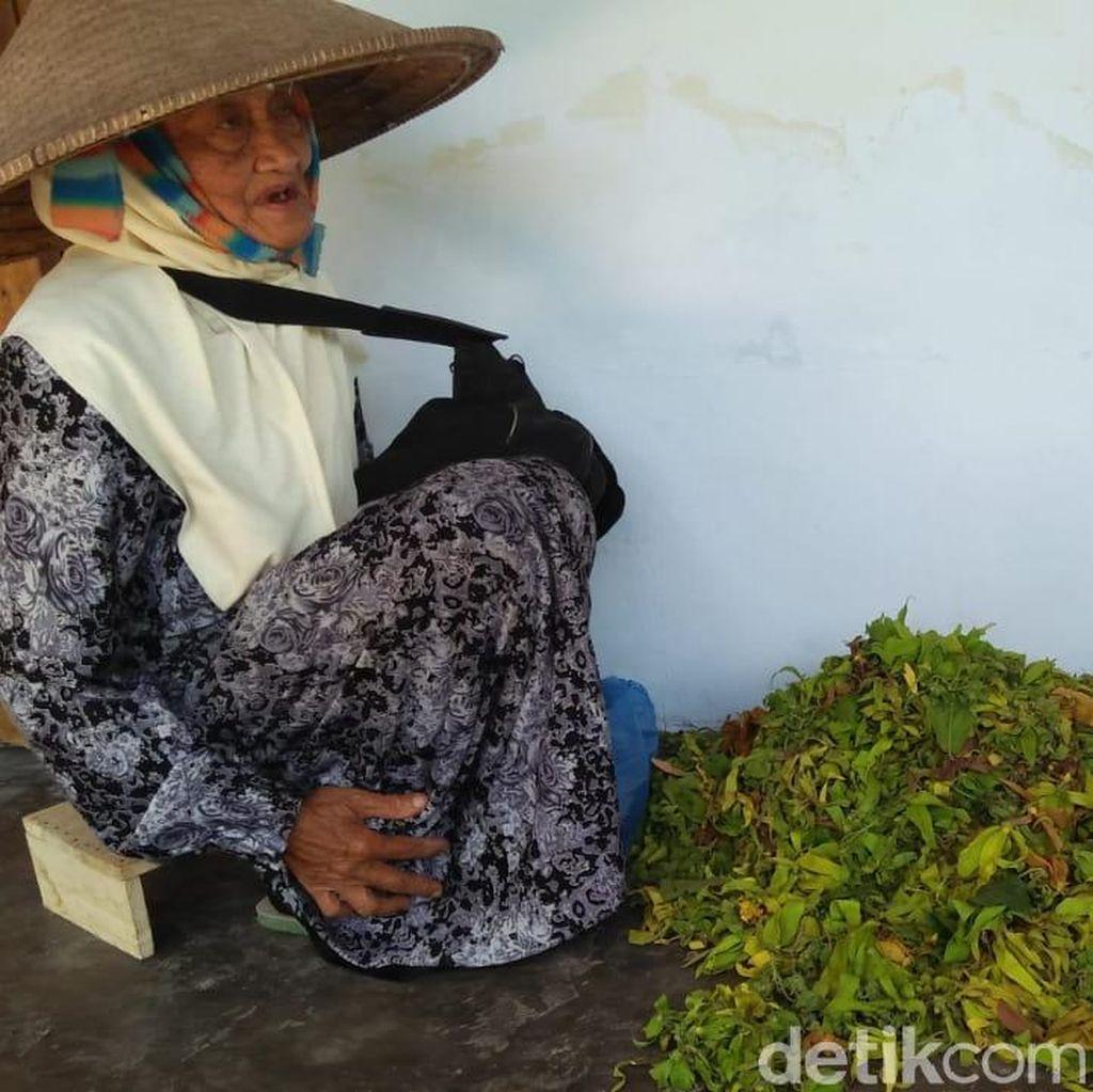 Soal Makan, Cucu Nenek Penjual Bunga Kenanga: Nasi Sayur Cukup