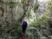 Melewati hutan