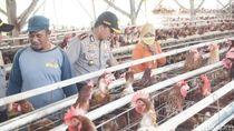 Satgas Pangan Selidiki Harga Telur dan Daging Ayam Naik, Ini Hasilnya