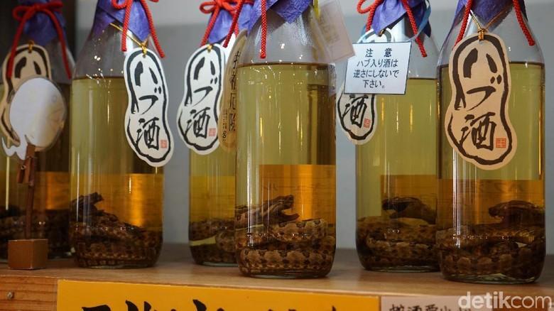 Foto: Awamori, sake ular viper khas Okinawa, Jepang (Masaul/detikTravel)