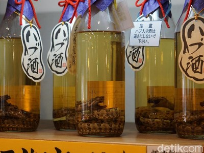 Siapa Sangka, Ada Oleh-oleh Sake Ular Viper di Jepang