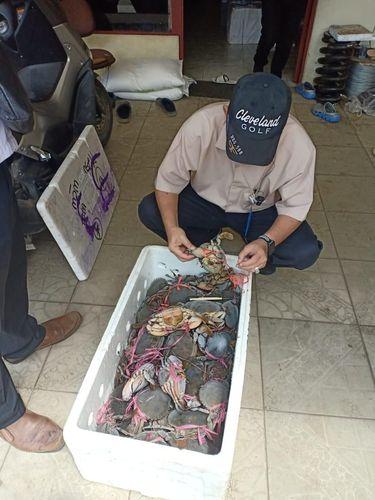 Kepiting tersebut hendak diselundupkan ke Kuching, Malaysia
