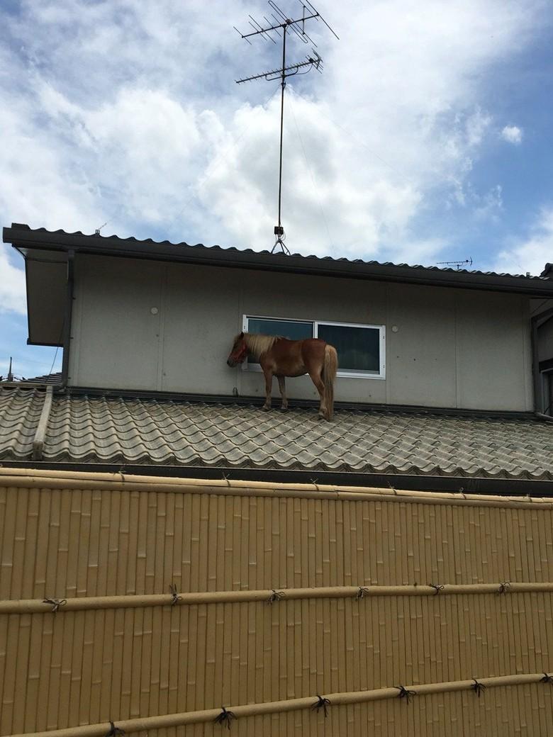 Foto: Kuda Nangkring di Atap Rumah Saat Banjir Dahsyat Landa Jepang
