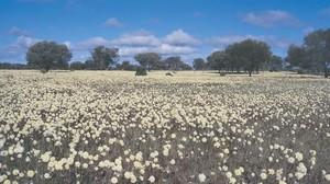 Liburan ke Australia, Bisa Lihat 12 Ribu Jenis Bunga Cantik