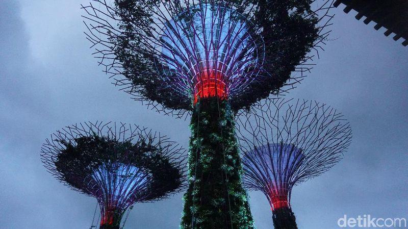 Gardens by The Bay merupakan taman buatan di Singapura. Meski dikenakan biaya, kawasan Supertree Grove bisa dikunjungi secara gratis, bahkan ada pertunjukan lampu-lampu cantik setiap pukul 19.45 (Shinta/detikTravel)