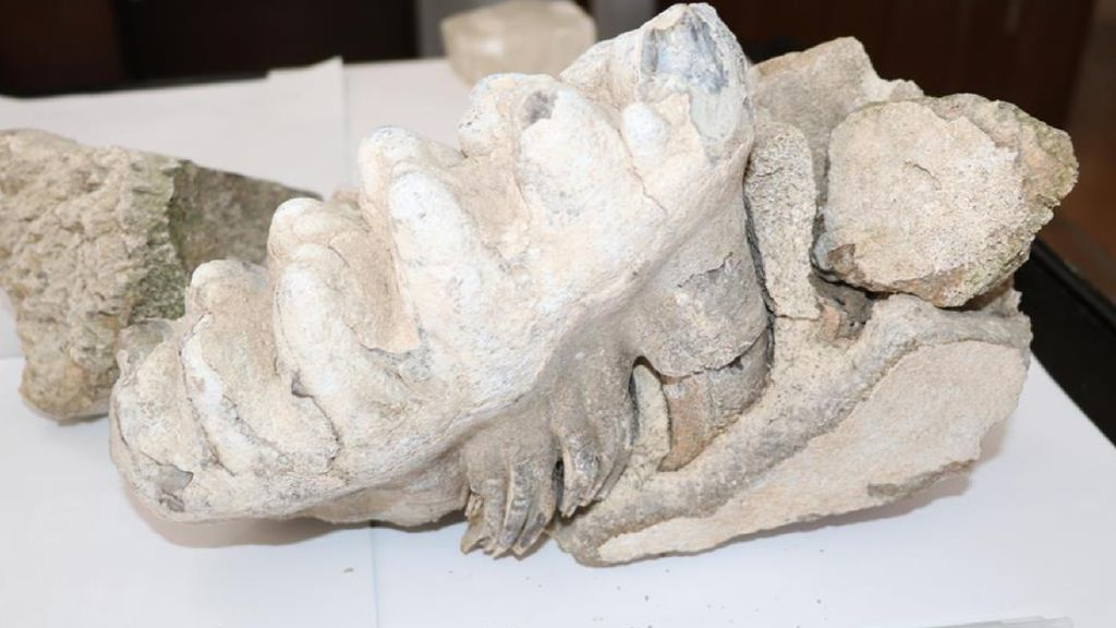 Foto: Petani Turki Temukan Fosil Mammoth Berusia 8 Juta Tahun