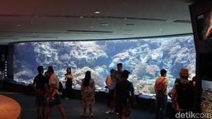 Foto: Beginilah Akuarium Terbesar Dunia dari Jepang