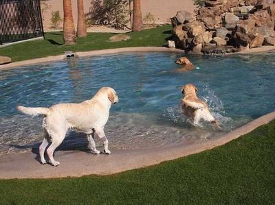 Bukan Buat Manusia, Kamar Hotel Mewah Ini Khusus Buat Anjing